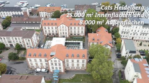 Cats Heidelberg