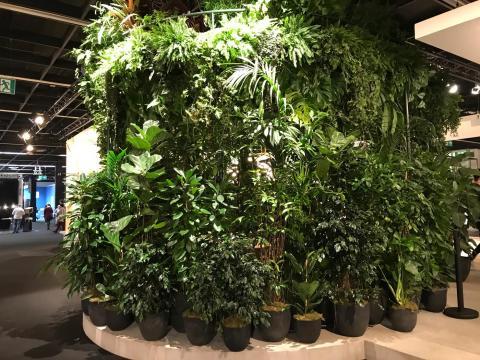 Pflanzen auf der imm Cologne